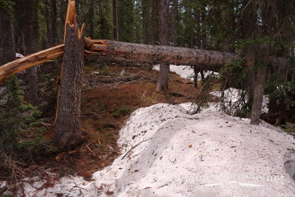 Crag Crest Trail 2014