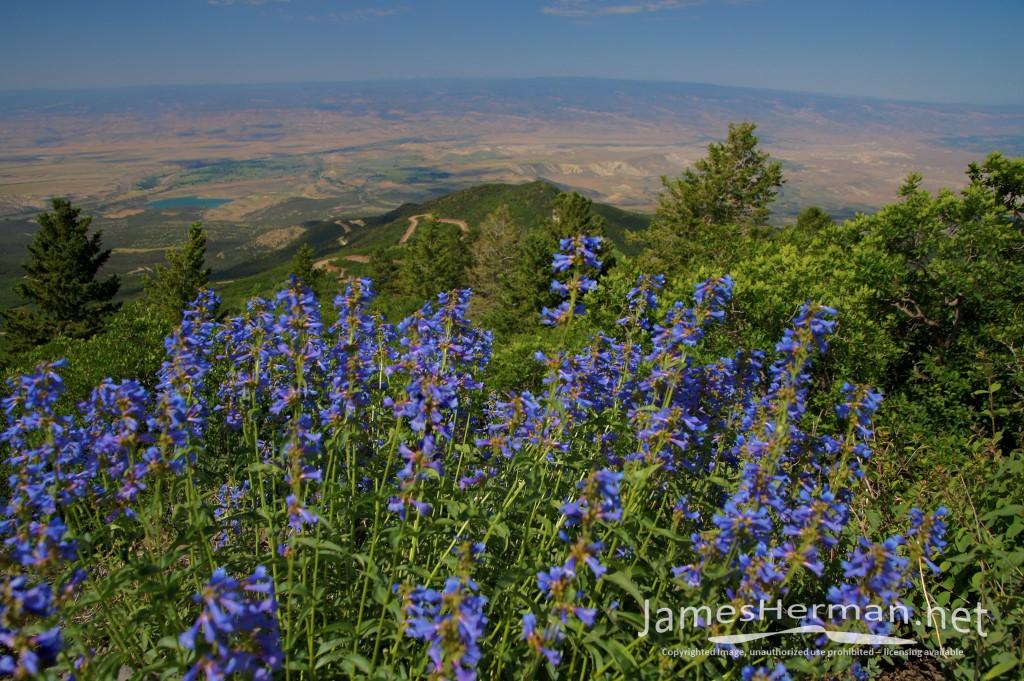 Colorado-June-2016--0212_3_4.jpg