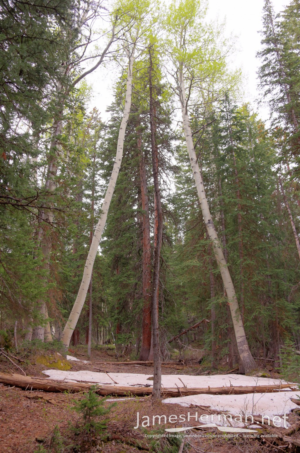 Grand Mesa National Forest 2014
